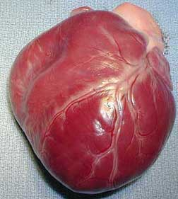 Picture Of A Dog's Heart