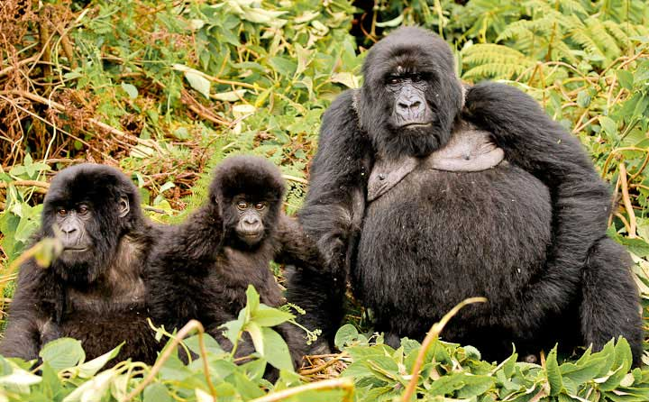 Rwanda 2011 Long Beach Animal Hospital