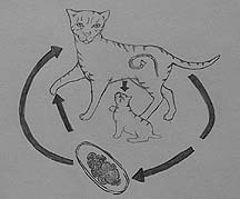 Worms (internal parasites) in animals | Long Beach Animal