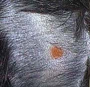 Skin Scraping | Long Beach Animal Hospital
