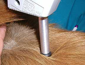 Using the activator on a dog