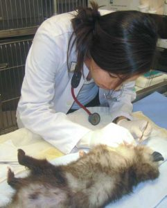 Student Working on Opossum