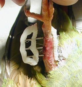 Birdrad-pins