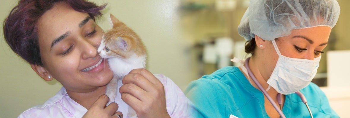 Long Beach Animal Hospital Veterinary Care For Pets Los