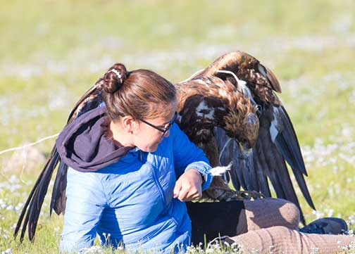The golden eagle grabbing the trainer by the leg