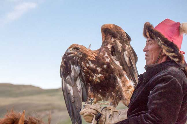 Master eagle falconer with his golden eagle perched on his glove