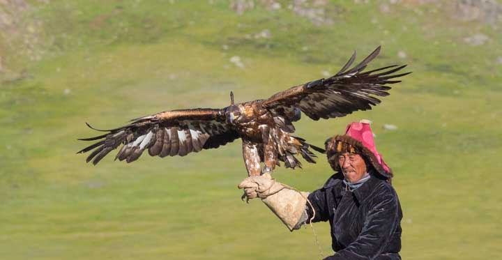 Master eagle falconer galloping with his eagle on his arm