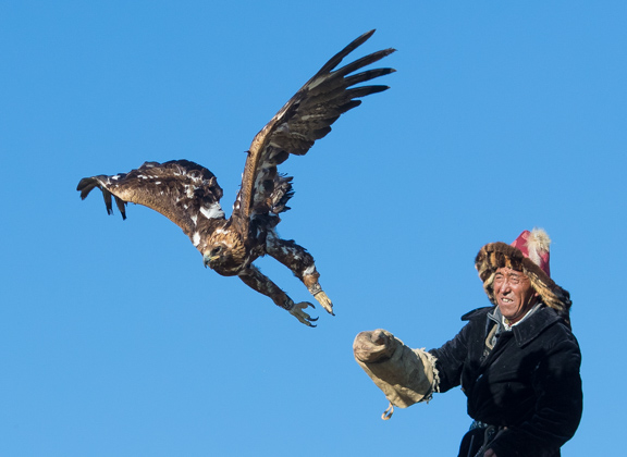 Master eagle falconer releasing his golden eagle with a beautiful blue sky