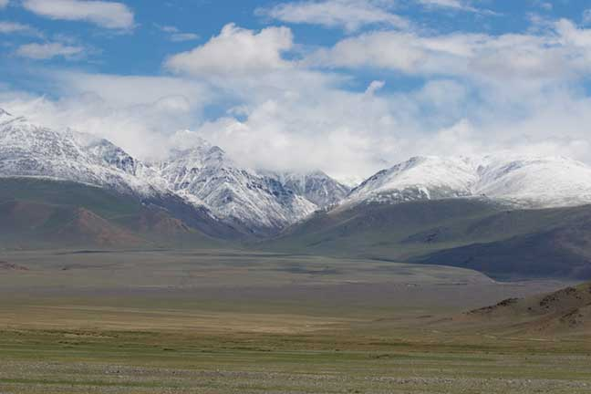 The lush green grasses of summertime in western Mongolia with beautiful snow capped mountains in the distance
