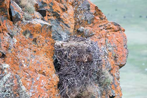 A drone's eye view of the eagle nest