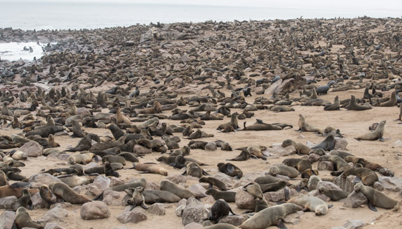 Namibia-skeleton-coast-cape-cross-fur-seals-1