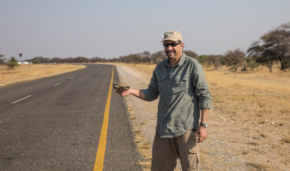 Turtle-road-Namibia-Carl