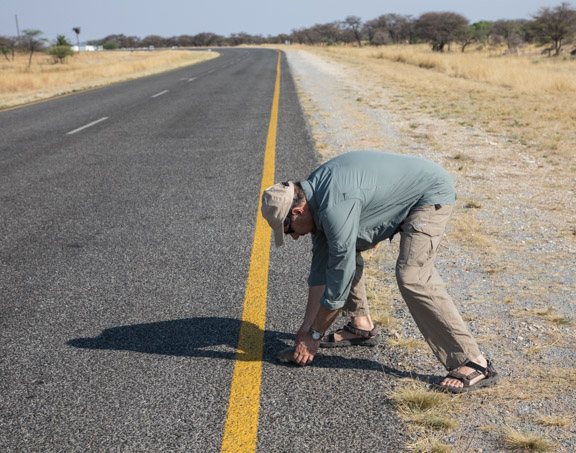 Turtle-road-Namibia-crossing