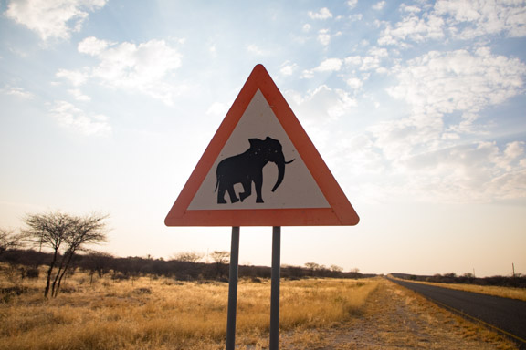 elephant-crossing-namibia