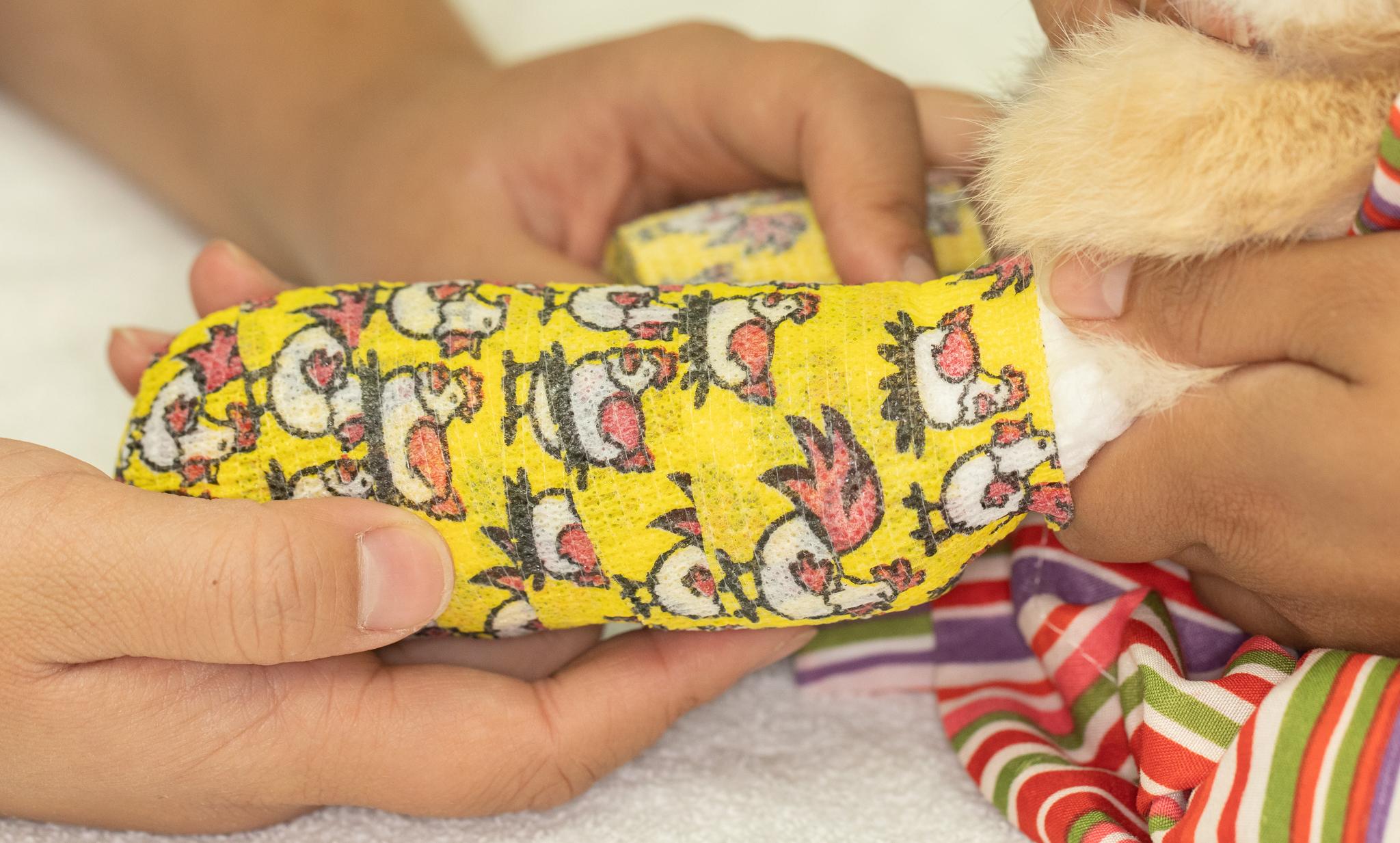 Broken front leg in a rabbit | Long Beach Animal Hospital