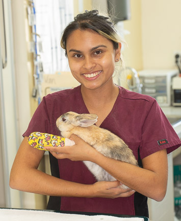 Smiling nurse holding a rabbit with a broken leg