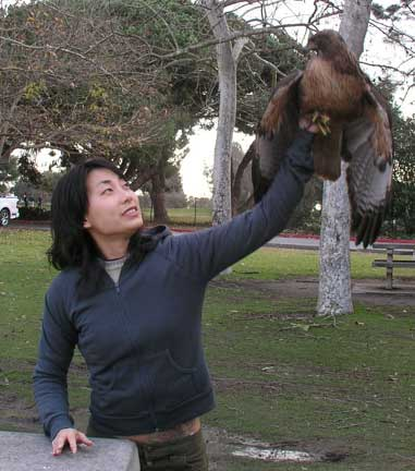 Student Releasing Hawk