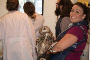 Nurse taking a radiograph on an Eurasian Eagle Owl