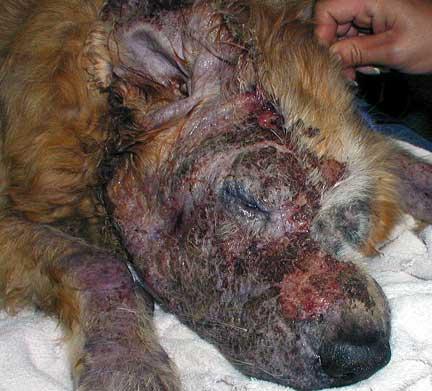 Severe Demodex skin condition