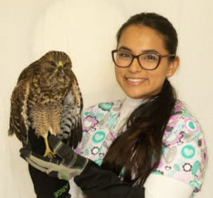Receptionist holding a hawk from our Wildlife Program