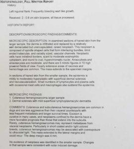 Histopathology Report of a Biopsy