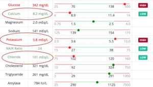 Electrolyte abnormalities in a cat with diabetes mellitus