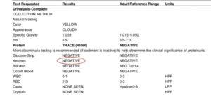 Normal dog urinalysis report