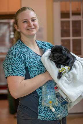 Nurse holding dog with IV catheter
