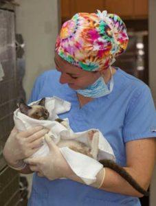 Vet student holding kitten