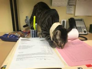 Cat walking on medical record