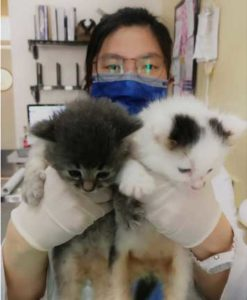 Staff holding cats