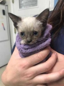 Kitten wrapped in a towel