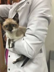Kitten in doctor's arm