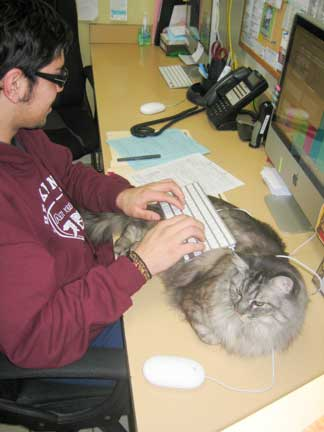 Cat with receptionist under keyboard
