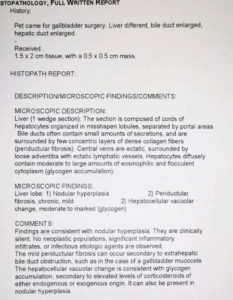 Liver biopsy report from pathologist