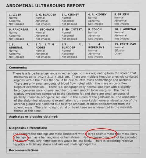 Ultrasound report of a spleen tumor